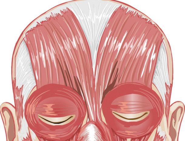 facial-eye-muscles